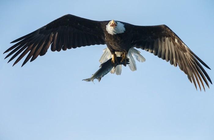 翼を広げた鷲