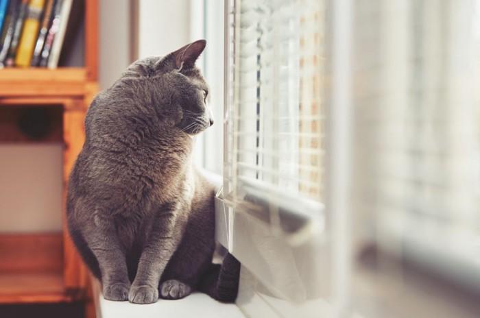 窓辺に立ち外をじっと見る猫