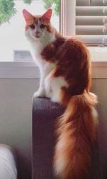 珍しい柄猫14