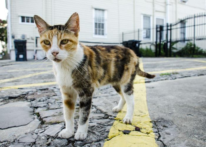 被災地と猫