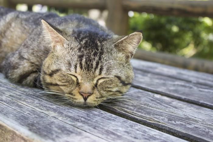 ご機嫌で眠る猫