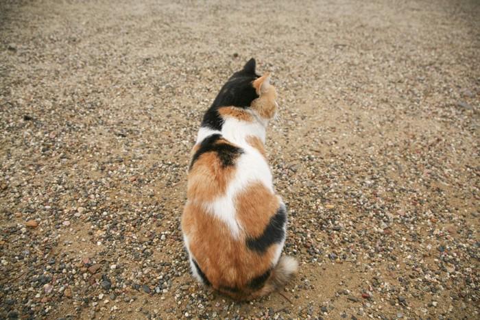 後ろ姿の柄のある猫