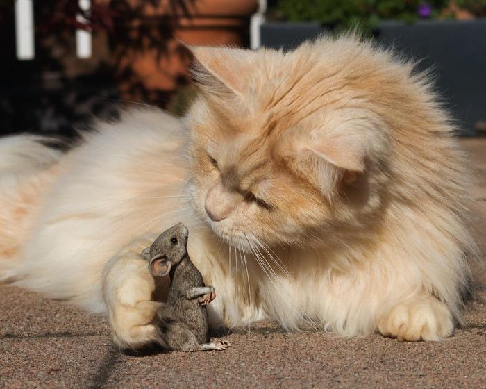 手を伸ばす猫とねずみ