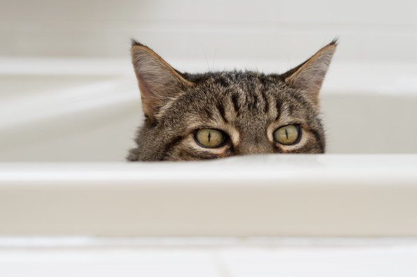 ちょろ見をする猫