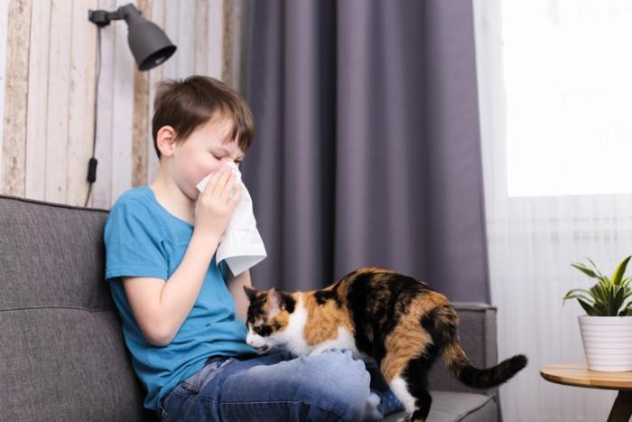 三毛猫と鼻をかむ少年