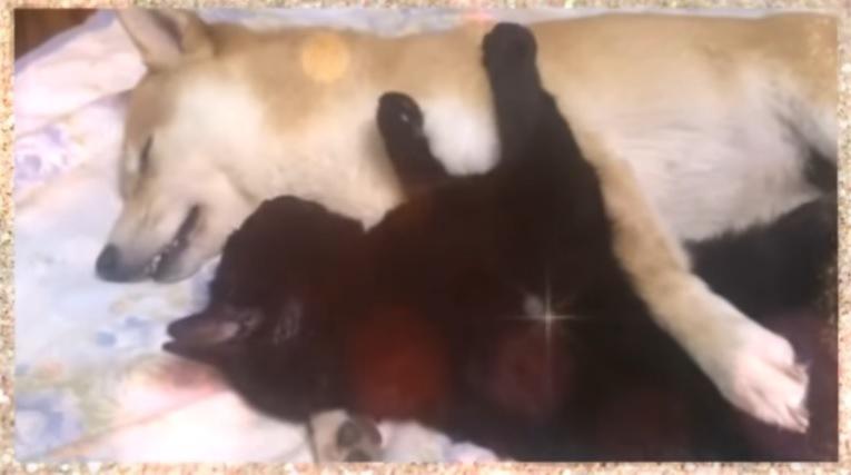 抱き合って眠る2匹