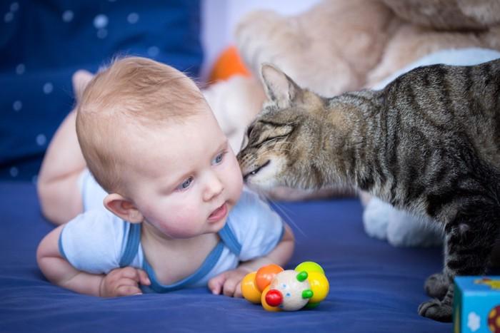 赤ちゃんにキスする猫