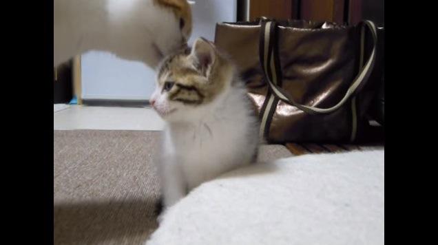 横向きの子猫の匂いを嗅ぐ猫
