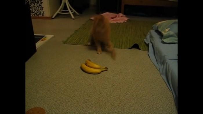 バナナに猫パンチ