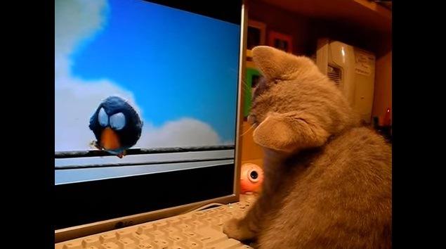 更に首を傾げる猫(画面左に鳥)