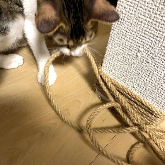 猫が縄をくわえている