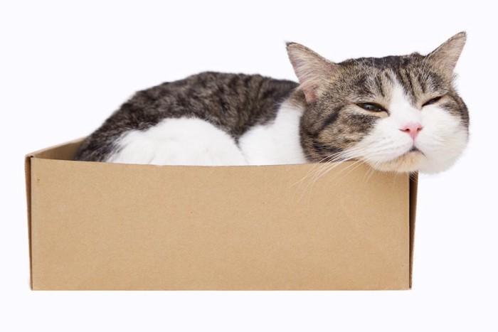 箱のフチに顎を乗せて眠る猫
