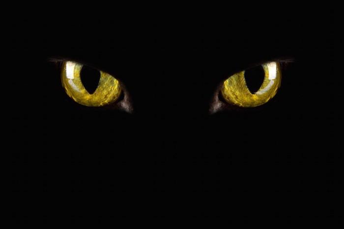 暗闇の中で光る黒猫の目