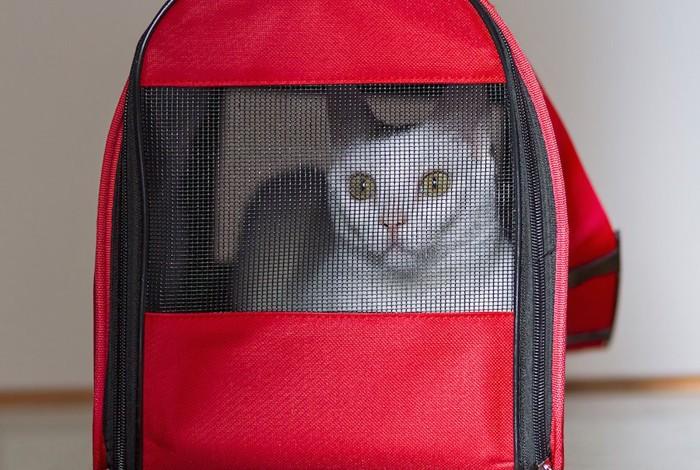 赤いキャリーに入った白猫
