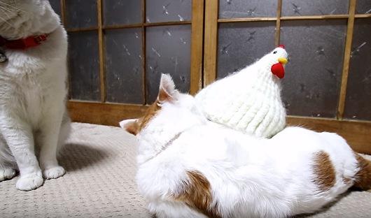 猫2匹と鶏帽子
