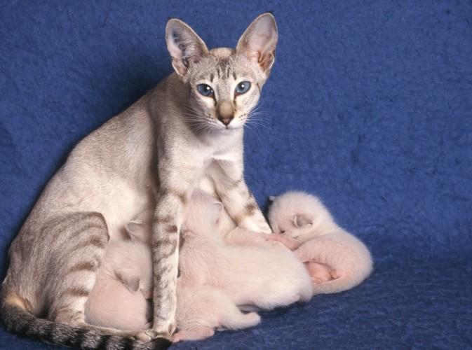おっぱいをあげている猫