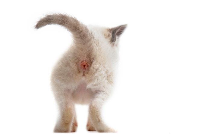 子猫のお尻