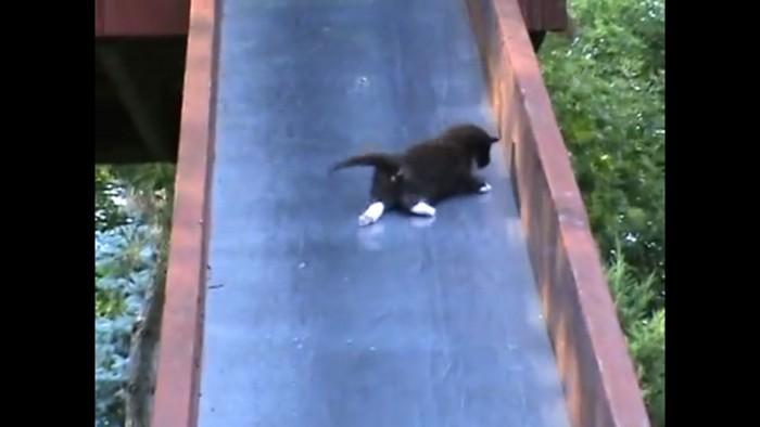 滑り台を滑る子猫