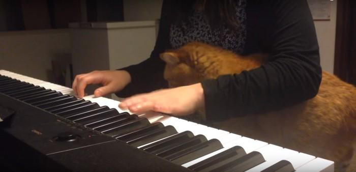 腕の間に入る猫