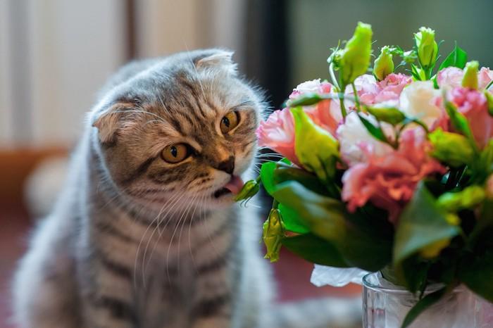 花瓶の花をなめる猫