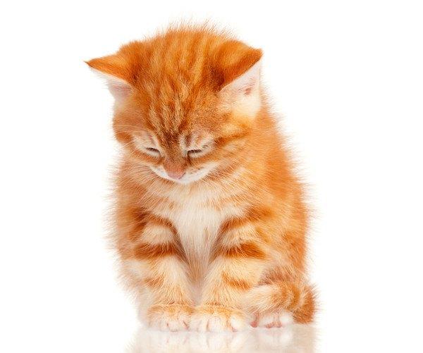 眠そうなキジ茶色の子猫