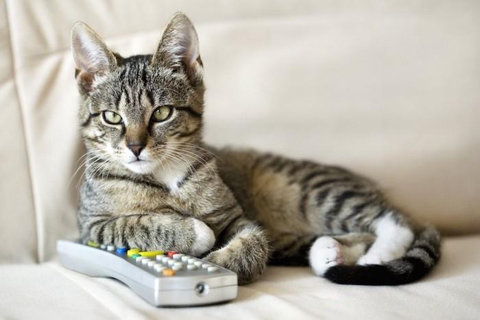 リモコンに手を乗せてくつろぐ猫