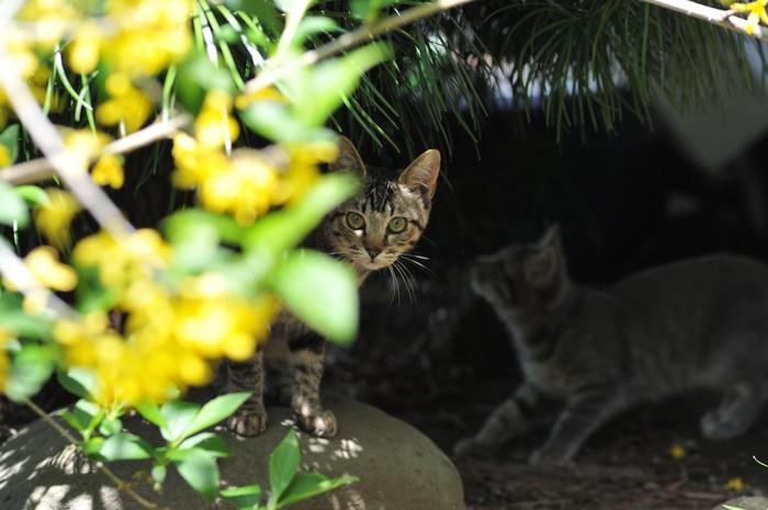 草むらの陰に隠れている野良猫