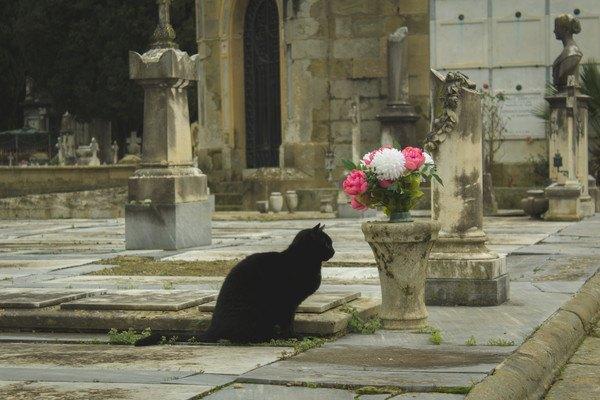 黒猫とお墓