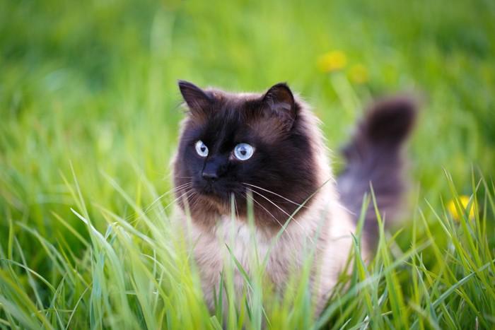 草の中で目を光らせる猫