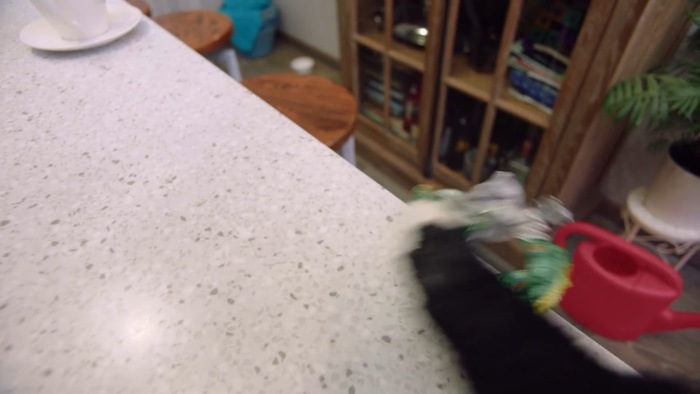 キッチン台に乗る猫