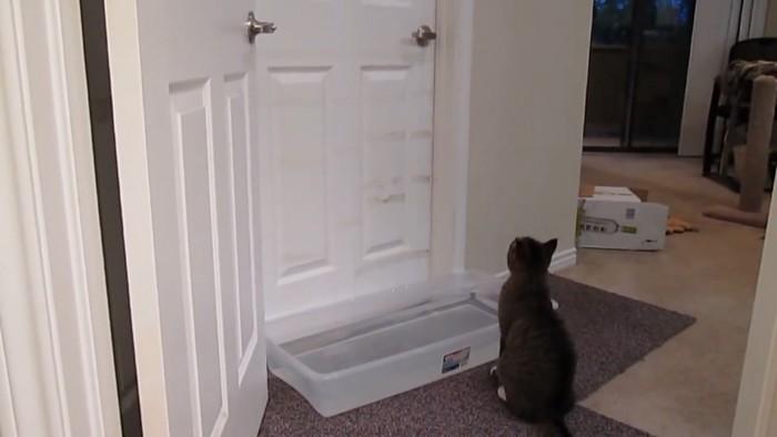 ドアの前に水