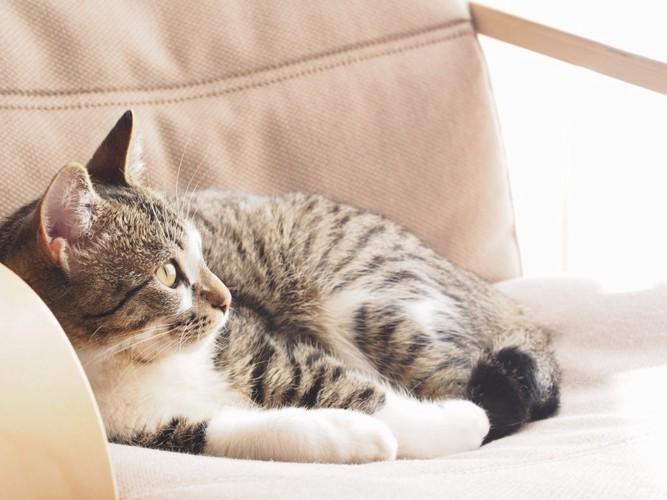 椅子の上でくつろぐ猫