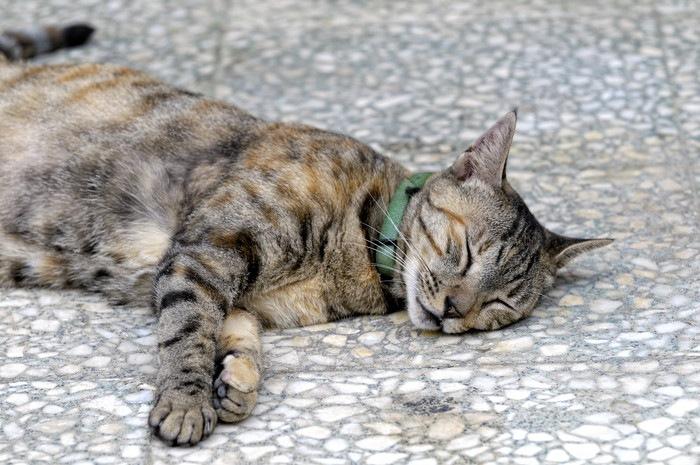 地面で寝る猫l
