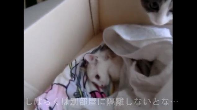 布団をかけている猫