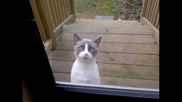 何かを伝えたい猫