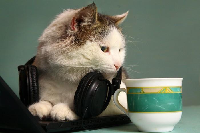 ヘッドホンをつけてカップをのぞいている猫