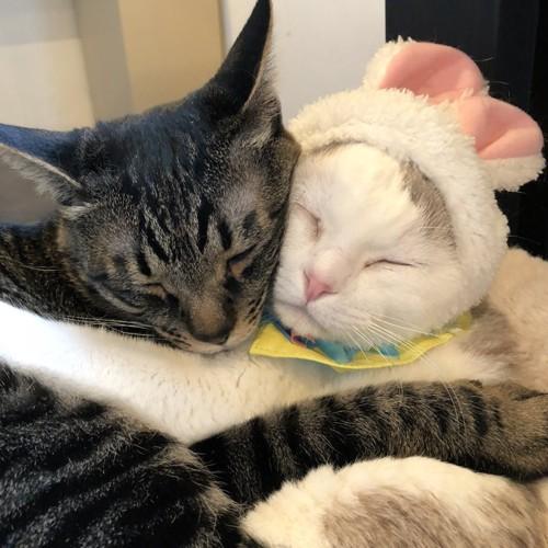 抱き合うキャットアパートメントの猫たち