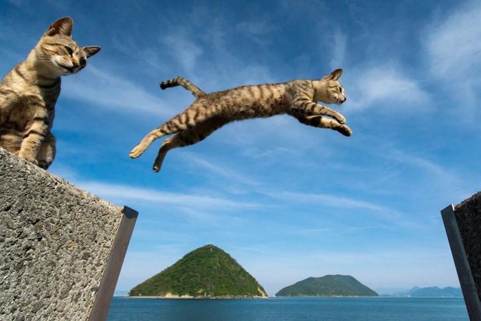 向こう側へジャンプする猫