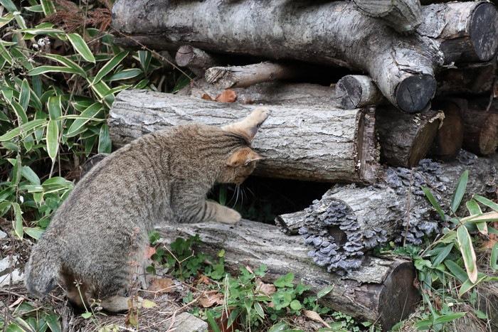 木の隙間を覗く猫