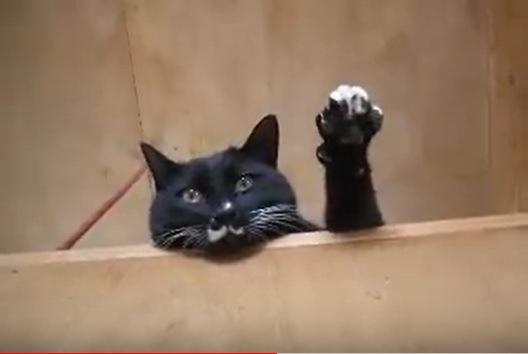 指を広げて手を挙げる猫