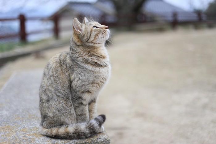 横をむいて座る猫