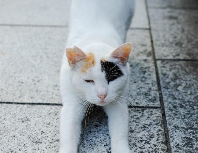 伸びをしながら近づく猫