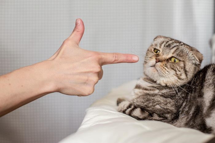 猫を指さしている写真
