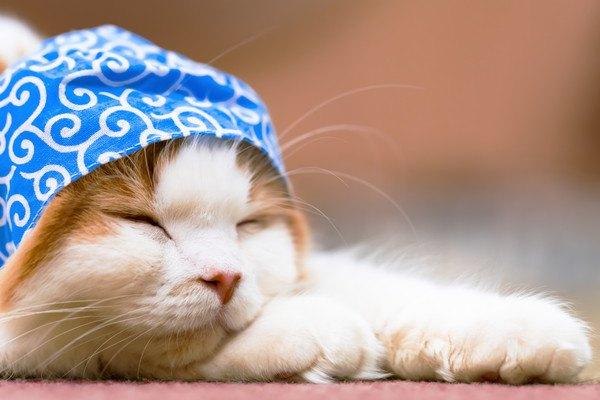 キャラクター性のある猫