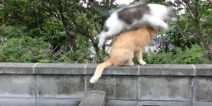 猫をとびこえる猫