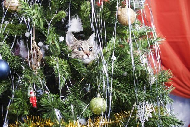 クリスマスツリーに入る猫