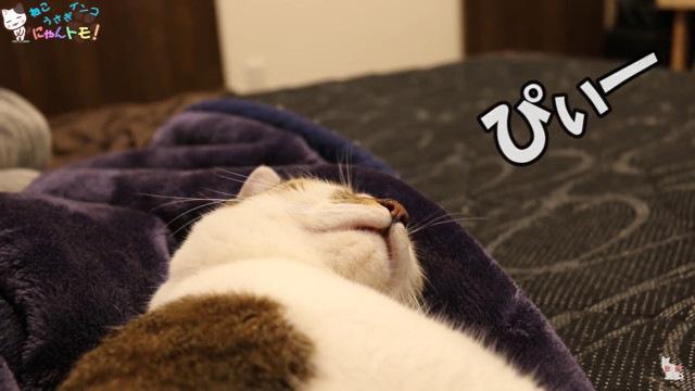 爆睡中の猫