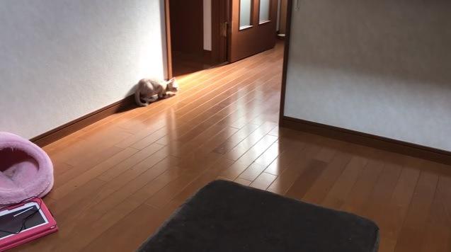 壁際で伏せる猫