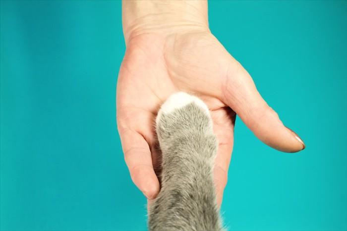 人の手の上に置かれた猫の手