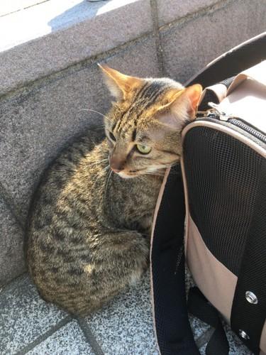 キャリーバッグの横の猫